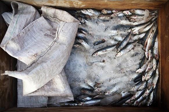 ปลา ศรีลังกา ประมง