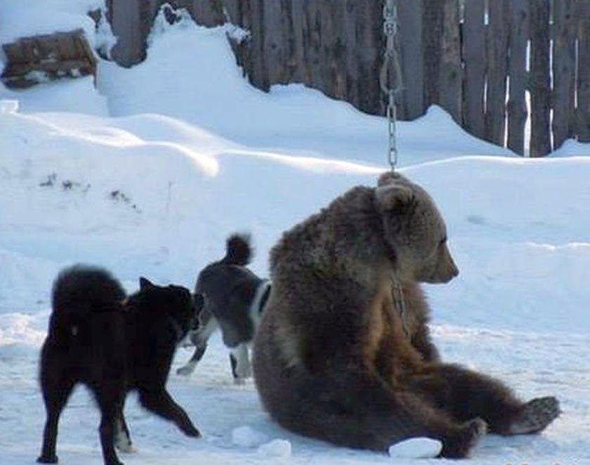 เสือดำ ทุ่งใหญ่นเรศวร bear baiting ล่าสัตว์ จริยธรรม