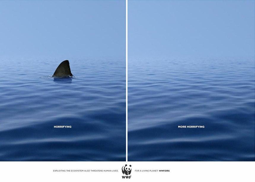 shark, มัลดีฟส์