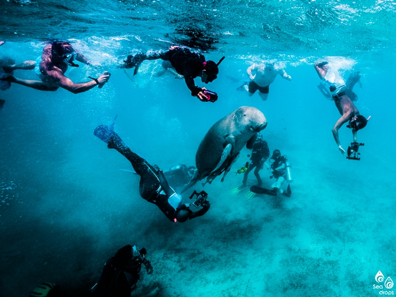 ดำน้ำ, เที่ยว, อนุรักษ์, ท่องเที่ยวเชิงอนุรักษ์, ดูกอง, อียิปต์, ฟิลิปปินส์