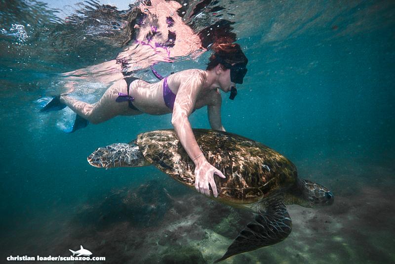 เต่าทะเล, นักท่องเที่ยว