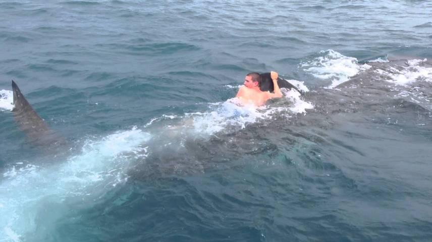 นักท่องเที่ยว, ขี่ฉลามวาฬ
