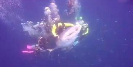 whale shark riding_the Sun