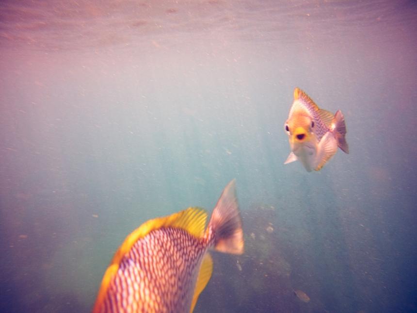 freedive 4